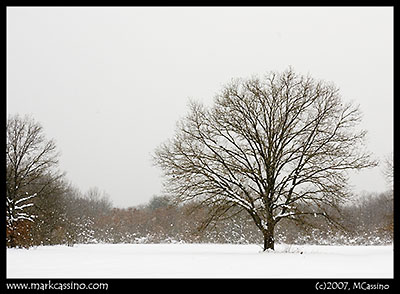 Allegan Forest Snowscape
