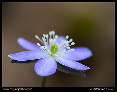Wildflower Photograph